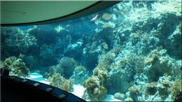 沖縄 民宿 美ら海水族館